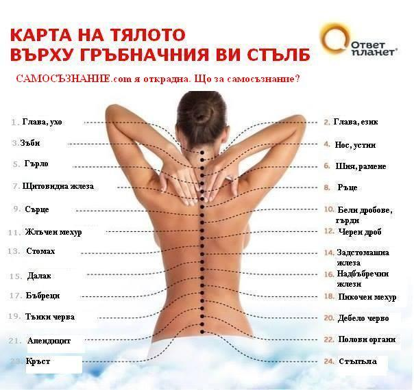 Карта на гръбначния стълб върху тялото Ви