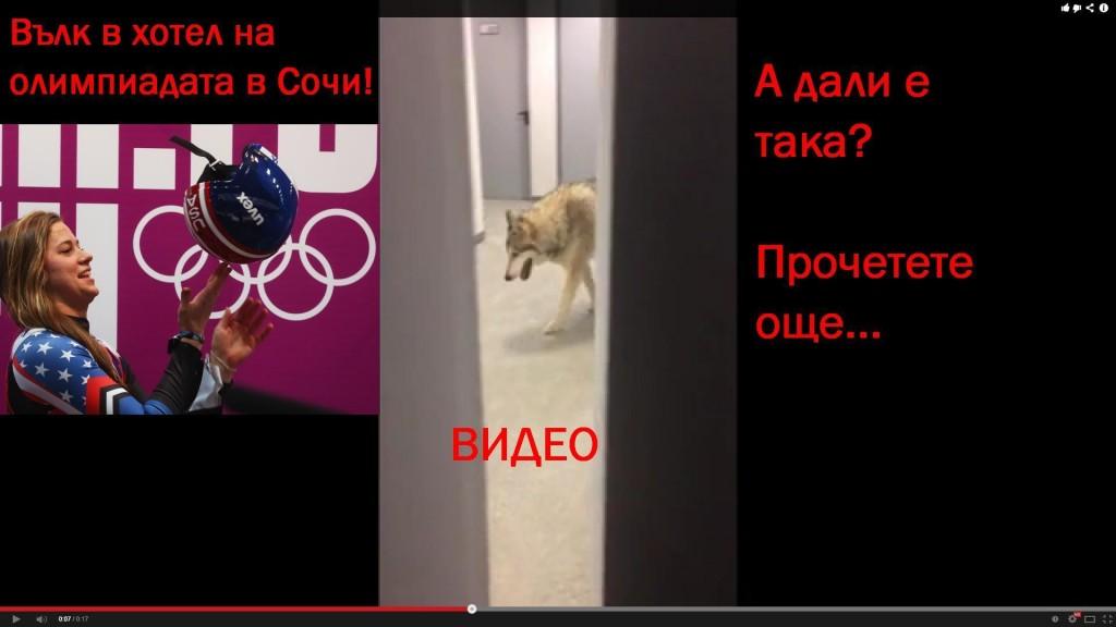 вълк в сочи на олимпиада американка Кейт Хансен
