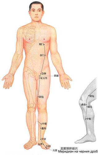 Меридиан на черния дроб